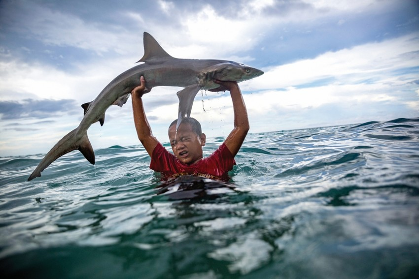 A little boy in Tokelau holds up a shark he's caught