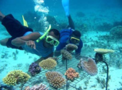 Coral Gardening - BBC Earth