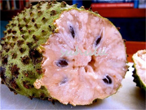 HEALTH BENEFITS OF SASALAPA aka SOURSOP or GRAVIOLA — Coconet